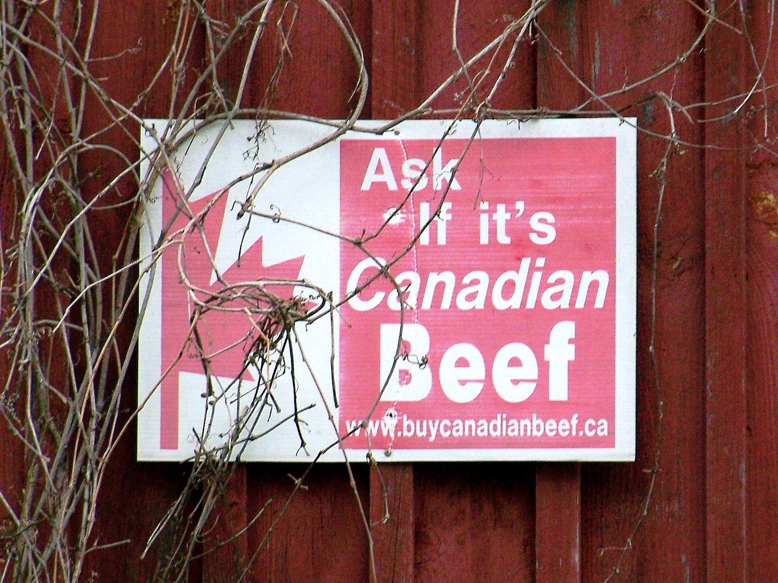 La Corée du Sud suspend ses importations de bœuf canadien à la suite de la découverte d'une vache folle en Alberta. © WiII S.