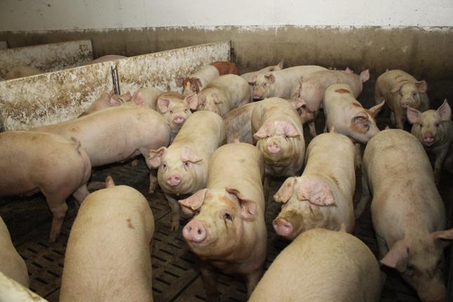 Plus de 300 producteurs espèrent que la Cour suprême tranchera en leur faveur dans 2 causes qui les opposent à la Financière agricole du Québec. © Archives/TCN
