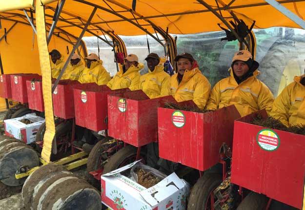 Malgré le froid et la pluie, les travailleurs s'affairent dans la machine à transplanter. © Les Pépinières Lareault