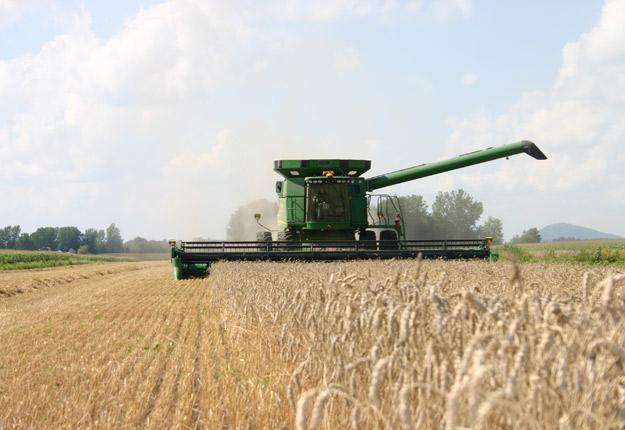 En 2015, les ensemencements de blé ont bondi de 31 % comparativement à 2014. © Martine Giguère