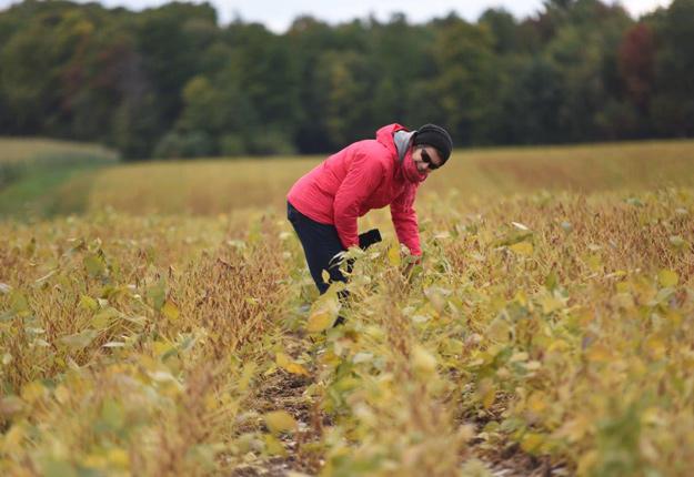 Une conseillère au champ pour faire le suivi du soya à l'automne. © Martin Ménard