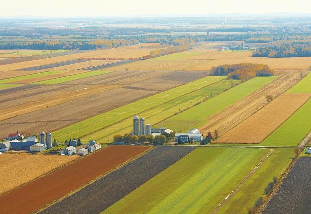 Malgré une plus grande taille, chaque ferme du 21e siècle représente toujours une part infime de l'offre alimentaire sur le marché. Crédit photo : Archives/TCN