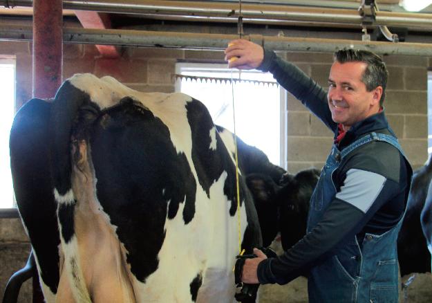 Bruno Jubinville, coordonnateur national de la classification à Holstein Canada, classifie des vaches depuis 20 ans. Crédit photo : Martine Giguère