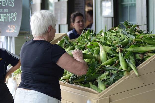 Le maïs sucré hâtif de la ferme Van Velzen et fils est offert au kiosque de Boucherville depuis le 10 juillet dernier. Crédit photo : Myriam Laplante El Haïli/TCN
