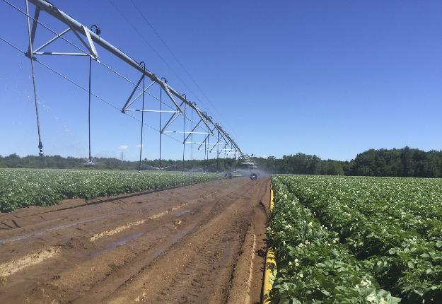 Les rampes d'irrigation permettent un arrosage plus uniforme. Crédit photo : Riego