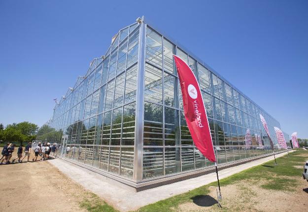 Des plafonds de 16 pi permettent d'optimiser la production horticole. Quant à la production maraîchère, elle profite de plafonds de 23 pi. Crédit photo : Vineland