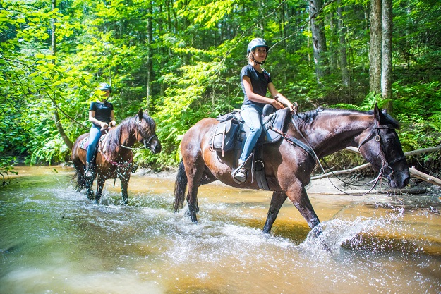 Le Centre équestre Dorelies, dans la région de Portneuf, a sauvé des chevaux Canadiens de l'abattoir pour en faire d'excellentes montures pour la balade. Crédit photo : Martin Ménard/TCN