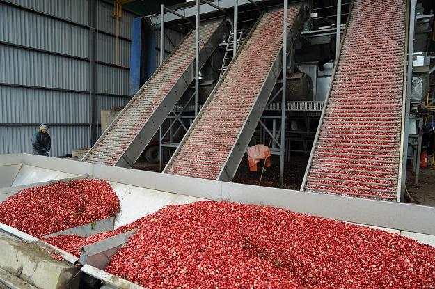 Les usines de transformation alimentaire canadiennes se dirigent globalement vers un profit record en 2016. Crédit photo : Archives/TCN