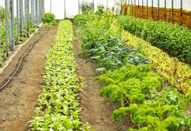 La Financière agricole du Québec a desserré les cordons de la bourse de l'État pour accroître la production agricole biologique. Crédit Photo : Archives/TCN