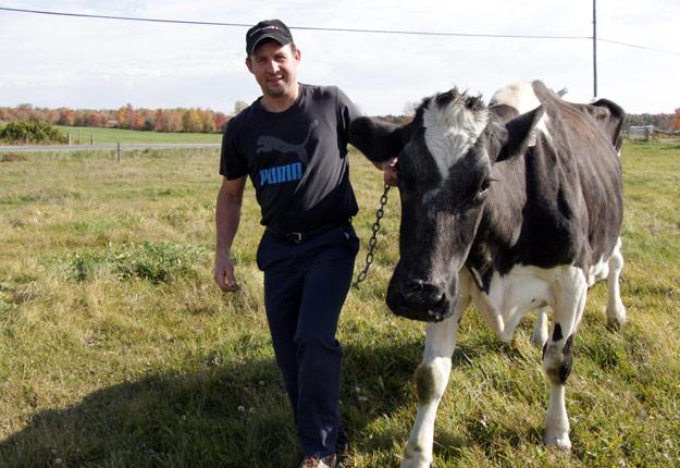 Arnolait Metro Chalu, de Bernhard et Emma Arnold, aura 18 ans le 30 octobre prochain. À raison de deux traites quotidiennes, cette vache d'exception serait la plus productive de tous les temps avec 202 000 litres de lait à ce jour… et ce n'est pas fini. Crédit photo: Pierre-Yvon Bégin/TCN