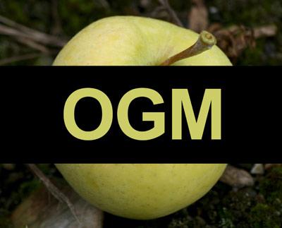 La Belgique a réaffirmé ses pleins pouvoirs, notamment en ce qui concerne la réglementation des OGM, avant de donner son appui à l'AECG. Crédit : Archives/TCN