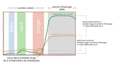 Figure 3 : Réflectance de diverses bandes en fonction de la santé de la végétation