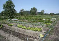 Les changements annoncés au PCTFA nuiront à l'ensemble des producteurs, mais plus particulièrement aux petites entreprises agricoles. Crédit photo : Archives/TCN