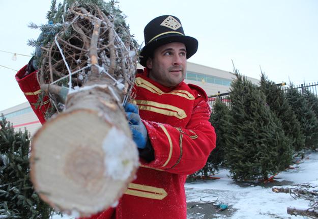 Le producteur de sapins de Noël Thierry Fortin et ses associés ont mis en place un service de livraison offert dans certaines régions du Québec, de l'Ontario et des États-Unis. Crédit photo : Ariane Desrochers