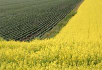 En 2015, le Canada était le plus grand exportateur de blé, de canola, de lentilles et de graines à canaris. Crédit photo : Archives/TCN