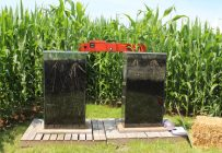Système racinaire d'un plant de maïs en fonction de la compaction du sol. Crédit photo : Caroline Barré