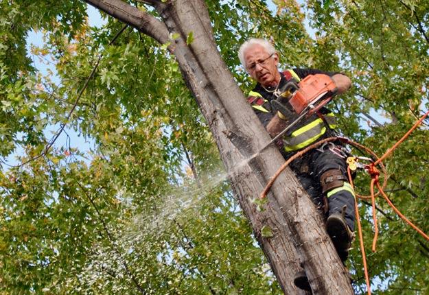 Nelson Castilloux taille cet arbre de manière à faciliter sa guérison.