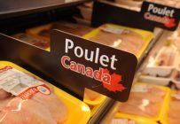 À terme, le Québec devrait produire quelque 26,5 % du poulet consommé au Canada. Crédit photo : Archives/TCN
