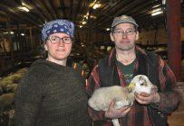 Donald Tremblay et Annie Bérubé ont relancé la commercialisation de l'Agneau de Charlevoix. Ils ont construit un centre de découpe et mis en ligne un site web. Crédit photo: Gracieuseté de Donald Tremblay et Annie Bérubé