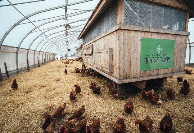 Le volet animal de la ferme est diversifiée : poules pondeuses, poulets, porcs et bovins croisés Belted Galloway et Wagyu. Crédit photo : Ferme des Quatre-Temps
