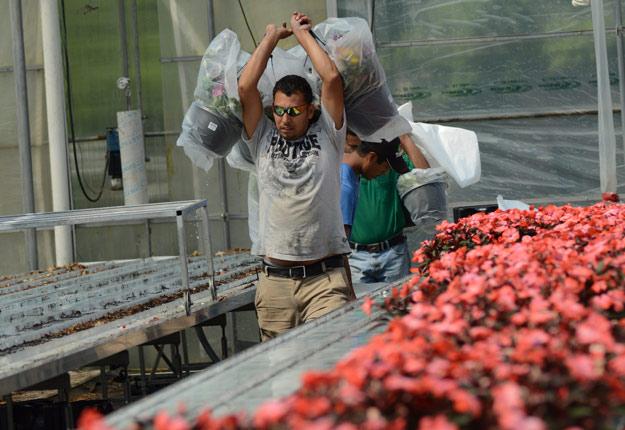 Les mesures d'assouplissement du PTET dévoilées au budget arrivent trop tard pour la récolte 2017, a affirmé le consultant en immigration à l'UPA, Denis Roy. Crédit photo: Myriam Laplante El Haïli/TCN