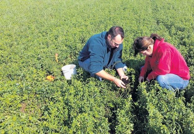 Le dépistage des ravageurs du sol permet de recommander des semences sans insecticides. Crédit photo : Gestrie-Sol