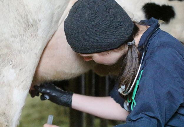 Catherine Tremblay est une vétérinaire spécialisée dans le soin des bovins laitiers au Bureau vétérinaire d'Upton. Crédit photo: Thierry Larivière / TCN