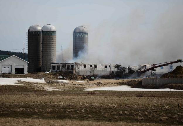 La centaine de vaches de la Ferme Rayon d'Or n'ont eu aucune chance de s'en sortir. Crédit photo : Pierre-Luc Rivard