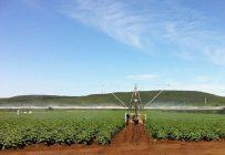 Le choix des techniques d'irrigation dépend des superficies en culture. Crédit photo: IRDA