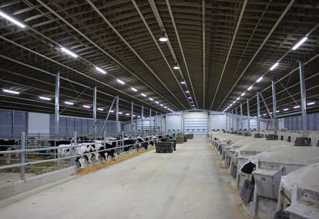 Une meilleure luminosité permet d'améliorer l'état de santé global du troupeau, car les vaches sont plus calmes et elles produisent plus de lait, explique Alain Perron, spécialiste de l'éclairage pour Voltech International. Crédit photo : Voltech