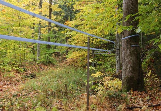 Le ministère des Forêts, de la Faune et des Parcs du Québec n'a retenu que 13 projets en forêt publique dans le volet démarrage sur les 103 demandes reçues. Crédit photo : Archives/TCN