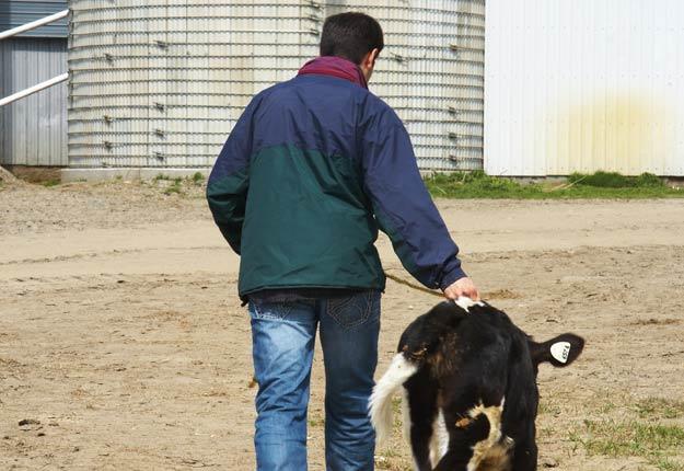Une trentaine de fermes laitières ont cessé leurs activités l'été dernier en Montérégie-Ouest. Crédit photo : Archives/TCN