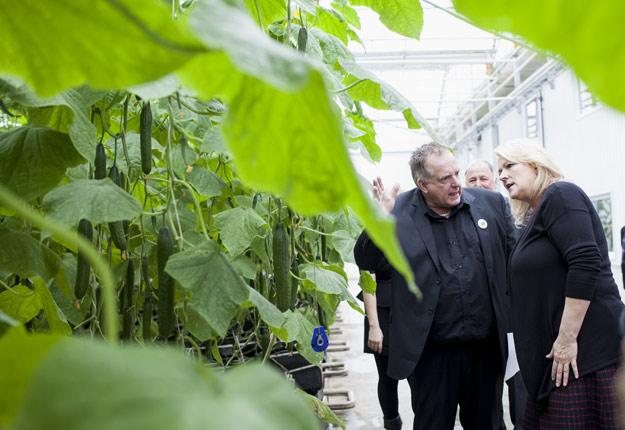Sylvain Lefort et Lise Thériault, vice-première ministre, parmi les plants de concombres en mars 2016. Crédit photo: MMTrudeau/ArchivesTCN