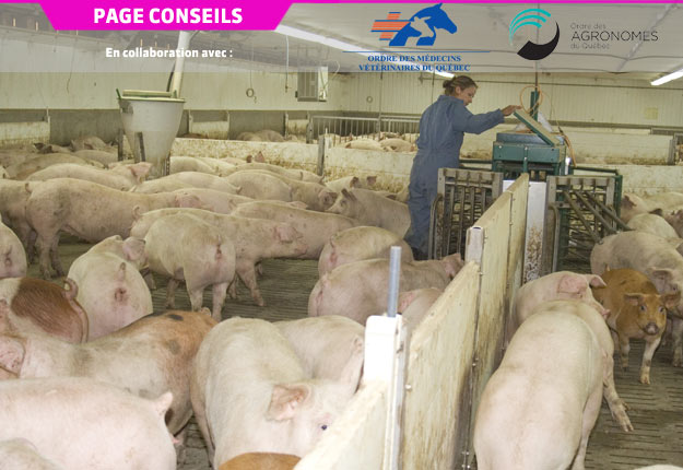 Selon les objectifs et les besoins du producteur porcin, il est important de déterminer le coût de production en temps réel. Crédit photo : Archives/TCN