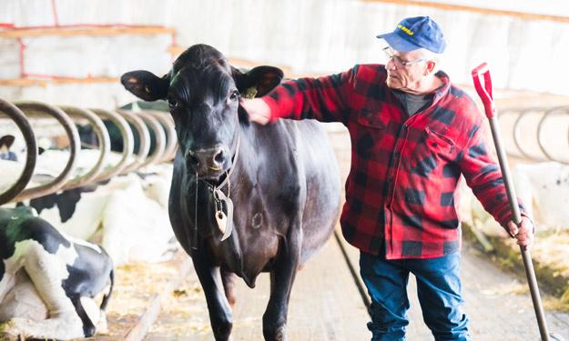 Jacques Massé préférait voir une relève s'occuper de ses bêtes plutôt que de vendre celles-ci à l'encan. Crédit photo : Martin Ménard/TCN