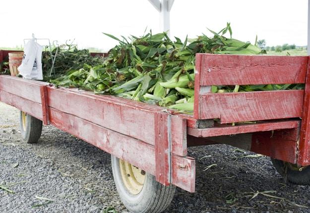 Des producteurs peinent à combler la demande des consommateurs qui se présentent à leur kiosque à la ferme. Crédit : Archives TCN