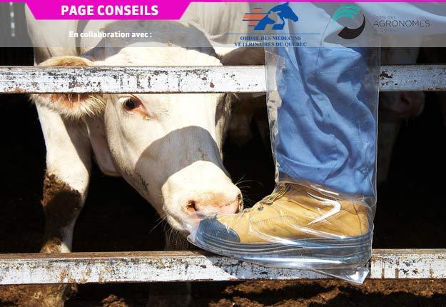 Protéger les animaux contre les agents infectieux commande d'évaluer correctement les risques propres à son entreprise. Photo : Archives/TCN