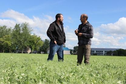 Le copropriétaire de la Ferme Domaine du Parc, Denis Ouellet, est bien fier d'expliquer comment il fait la lutte aux mauvaises herbes dans son champ de pois verts.