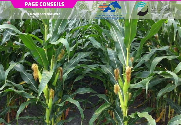 Des essais à la ferme comparant différentes doses d'azote constituent l'une des meilleures méthodes pour déterminer les doses économiques optimales du maïs.