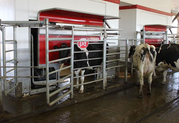 Le Programme d'investissement pour fermes laitières génère un véritable engouement chez les éleveurs de bovins laitiers. Crédit photo : Archives TCN