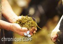La qualité des fourrages est essentielle à une bonne production laitière. Crédit photo: Martin Ménard/Archives TCN