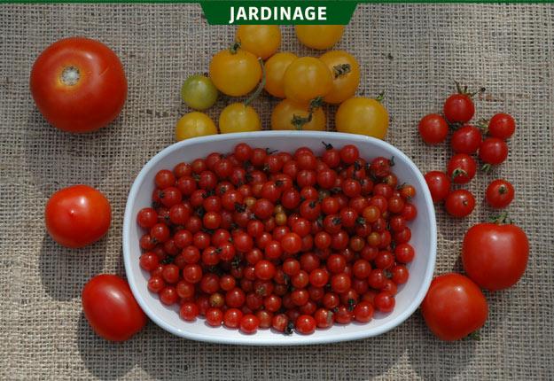 Beaucoup de fruits et légumes parviennent à maturité en grande quantité dans un court laps de temps. Crédit photo : Rock Giguère