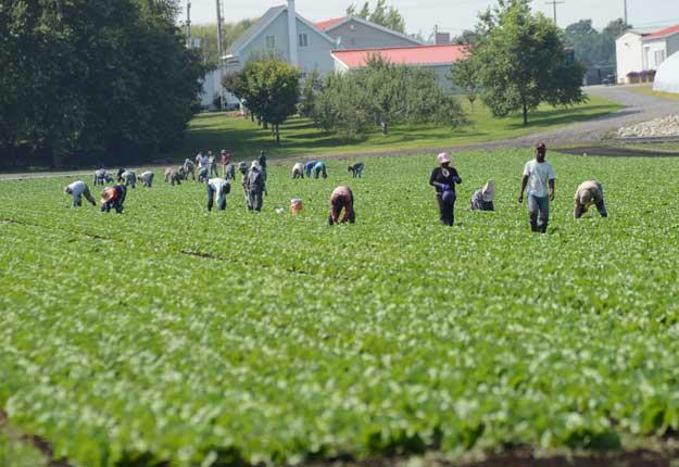 Une cinquantaine de travailleurs attendent toujours de pouvoir être relocalisés. Photo: Archives