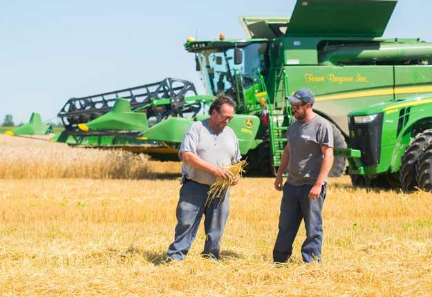 Michel et Mathieu Forget récoltent leur blé d'automne ces jours-ci. Avec 4,5 t/ha cette année, leur rendement est inférieur à la moyenne habituelle. Photo : Martin Ménard/TCN