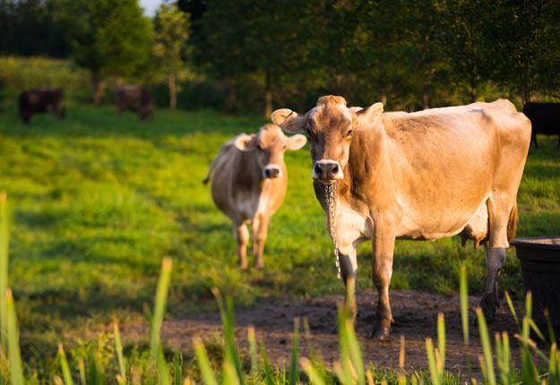 Le Programme d'investissement pour fermes laitières suscite de nombreuses questions. Crédit photo : Archives TCN
