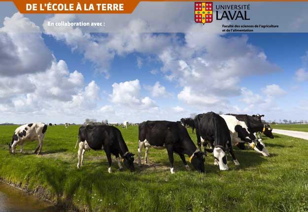L'alimentation de la vache influence la composition en acides gras à chaîne ramifiée du lait.