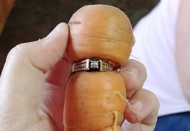 En Alberta, la bague de fiançailles de Mary Grams a été retrouvée 13 ans plus tard grâce à une carotte qui avait poussé dans le jardin de la ferme familiale. Crédit photo : Iva Harberg/La Presse Canadienne