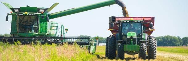 L'épeautre se vend un peu plus cher que le blé, mais les débouchés sont moins nombreux. Crédit photo : Martin Ménard/TCN