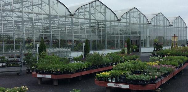 La Ferme Guyon s'adapte aux demandes des clients en offrant un vaste choix de fleurs en pots. Crédit photo : PSQ