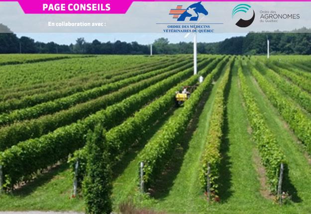 L'engouement accru des consommateurs pour les vins du Québec incite certains vignerons à augmenter leurs surfaces de vignes, tandis que d'autres investisseurs songent à tenter leur chance avec cette culture. Crédit photo : Ordre des agronomes du Québec